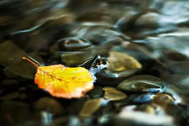 唐诗宋词里的秋天,尽揽山水风月-第8张图片-诗句网
