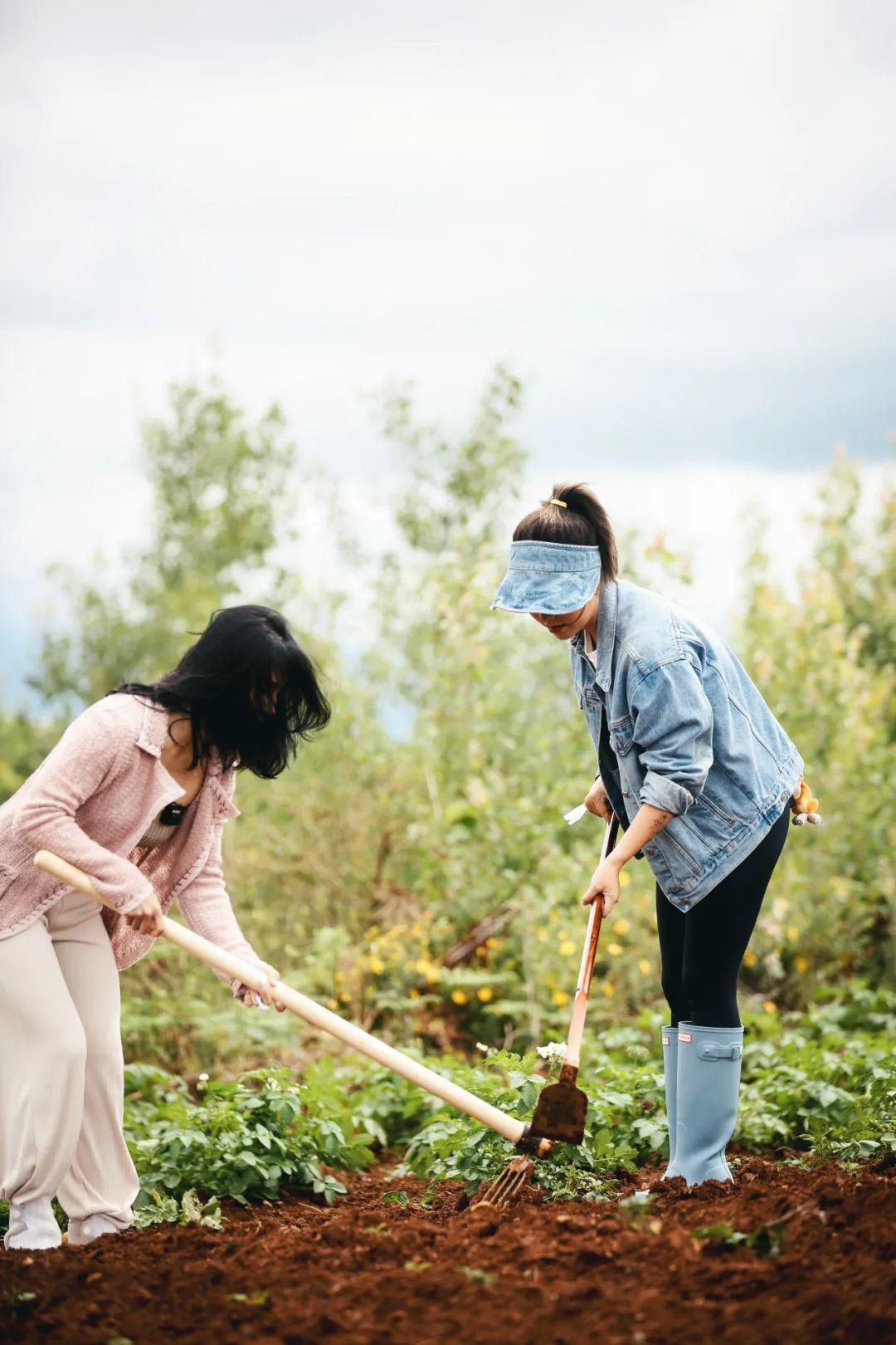 究竟是什么宝藏藜麦,引得来自各行各业的女性创造者们纷纷助力?
