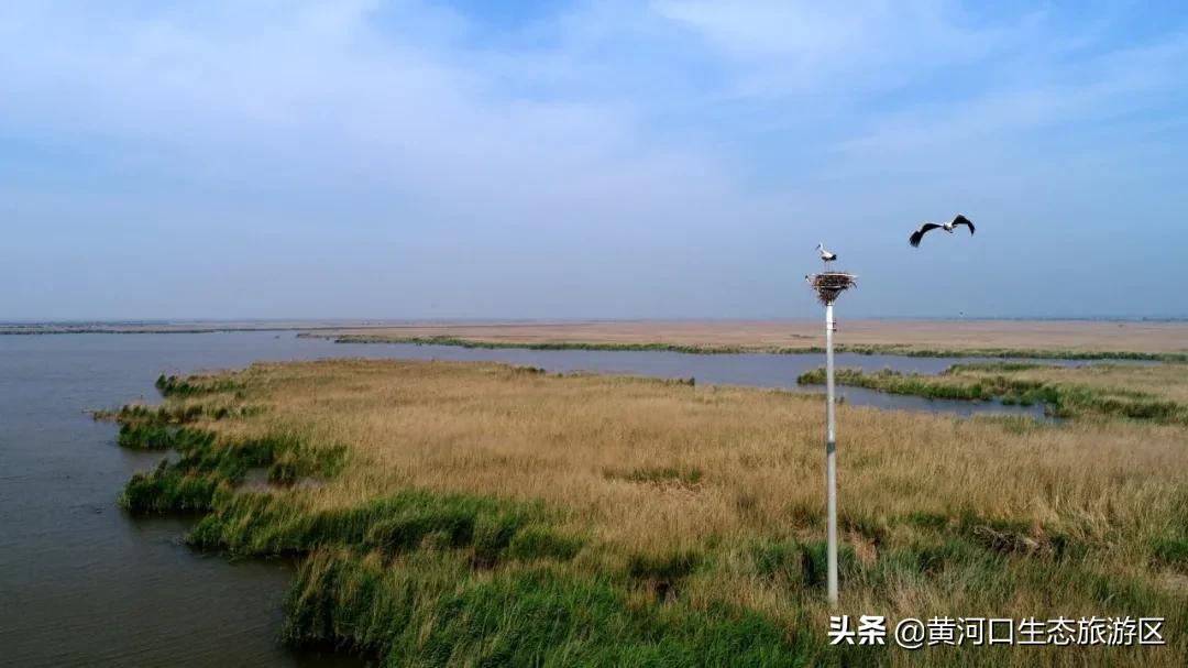 【黄河口生态旅游区】光与影的故事 摄影师眼中的观鸟秘境