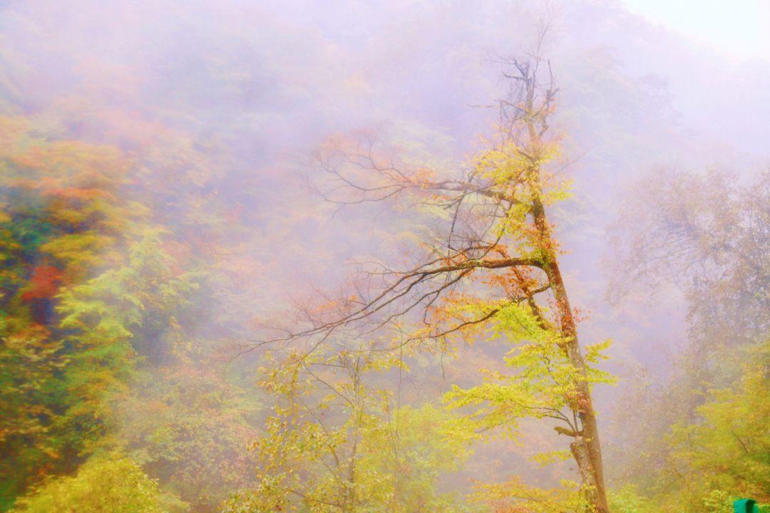 """这里秋红彩林美到爆——180米直梯让你""""一步登天"""",满目惊喜"""