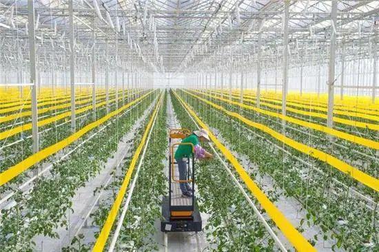 """真正的""""数字农业""""大于农业科技"""