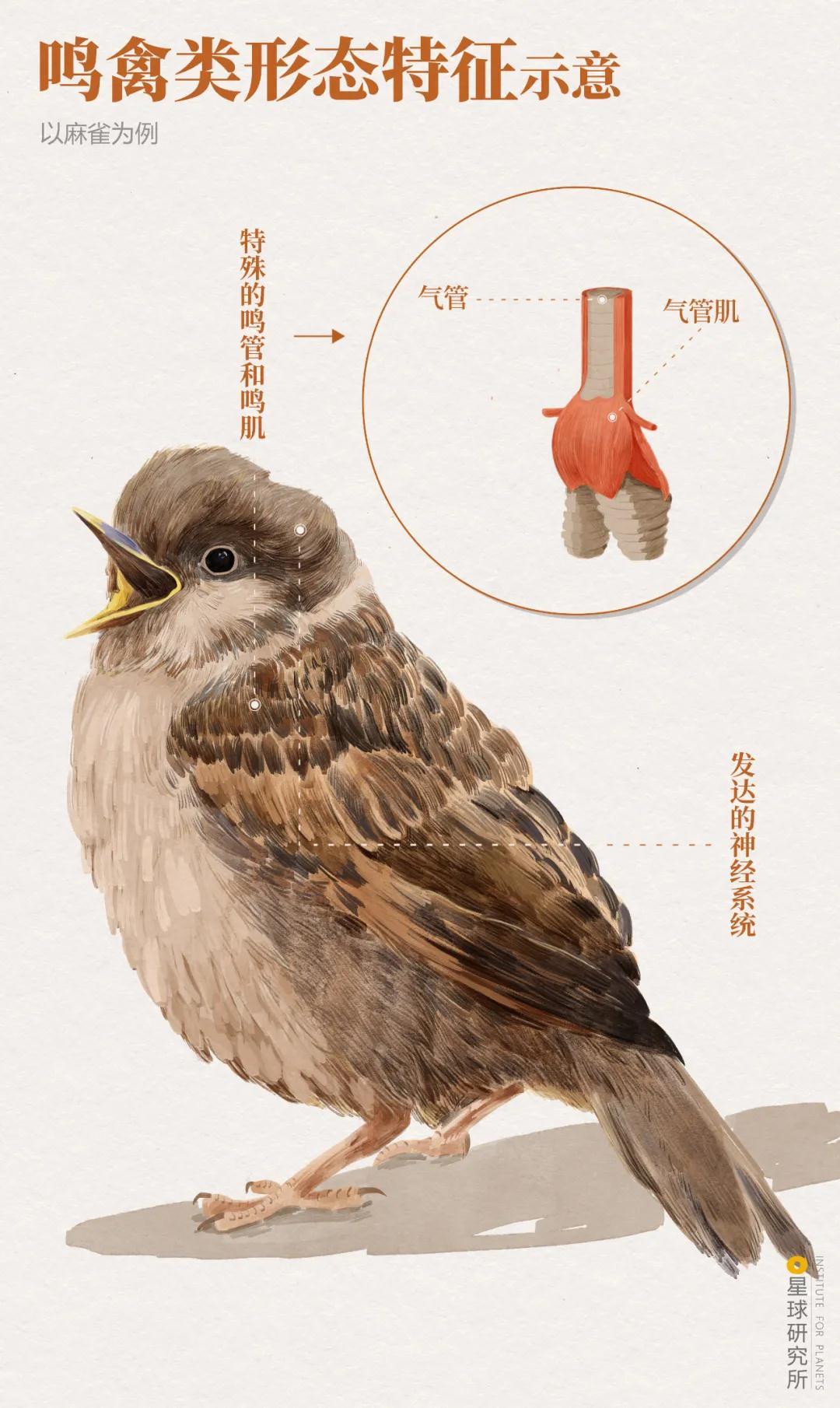 林草科普|1400多种中国鸟,你认识多少?