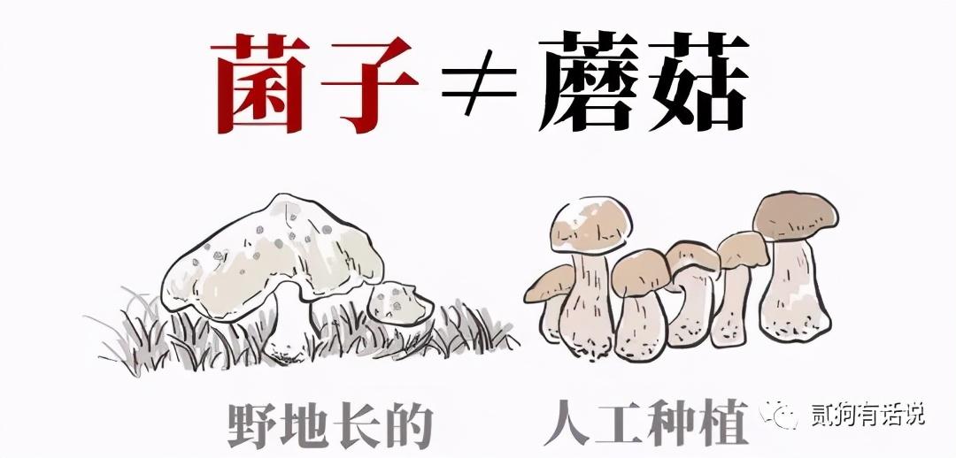 """每年夏季,都是云南人的大型吃蘑菇""""中毒现场"""""""