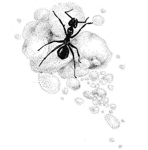 从小处着手,终生培养好奇心一一《昆虫记》读后感
