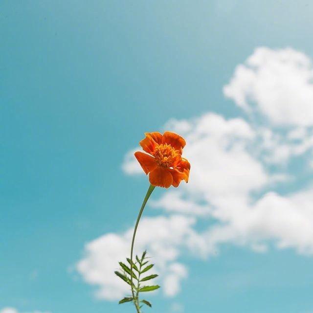 早安心语正能量语录句子,阳光向上,激励人心