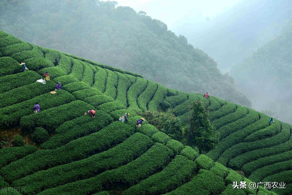 广西农业如何投资?来看广西各市农业招商宣传(贺州、河池篇)