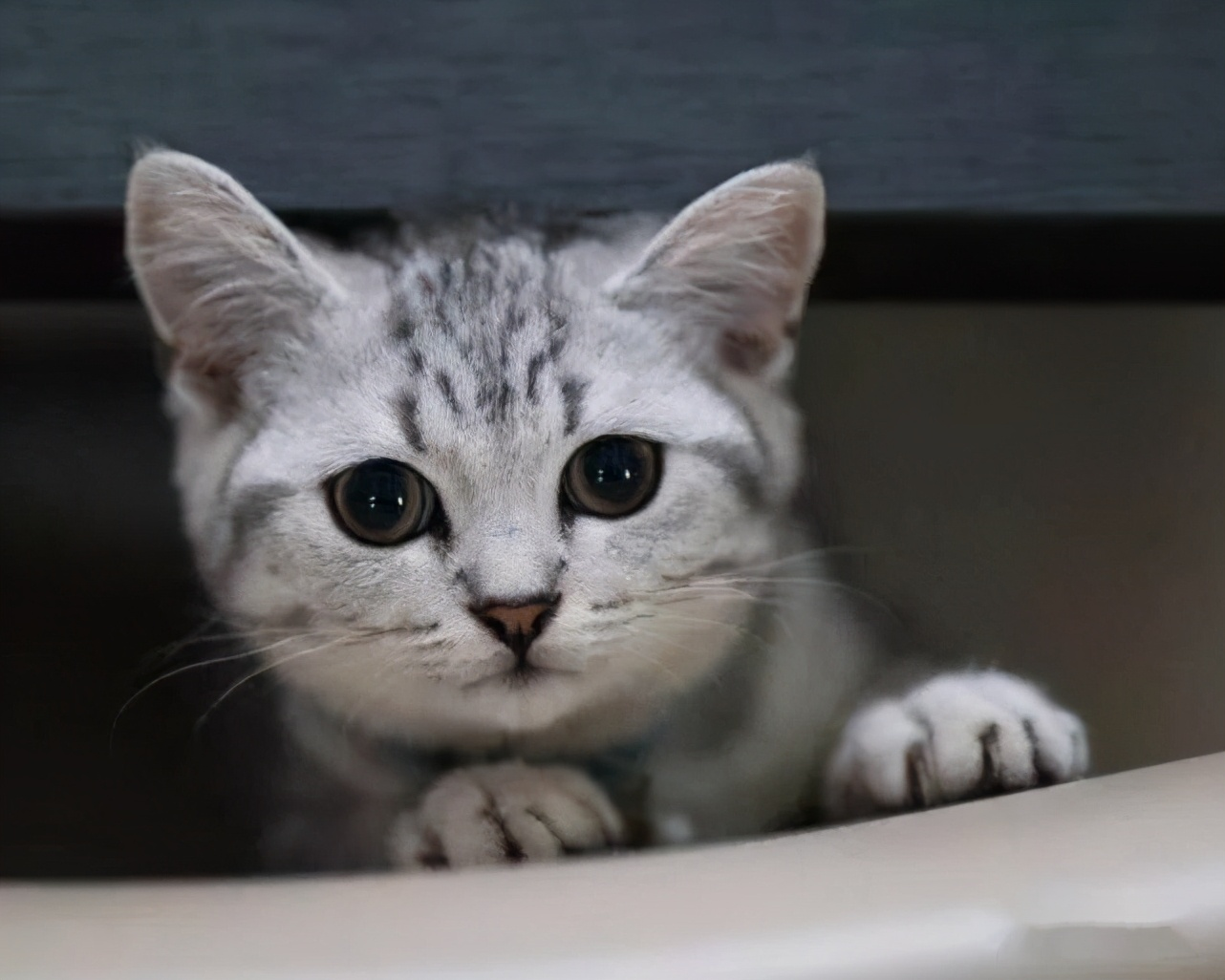 """猫咪""""关心""""主人才会有的8个表现,你是否知道?"""