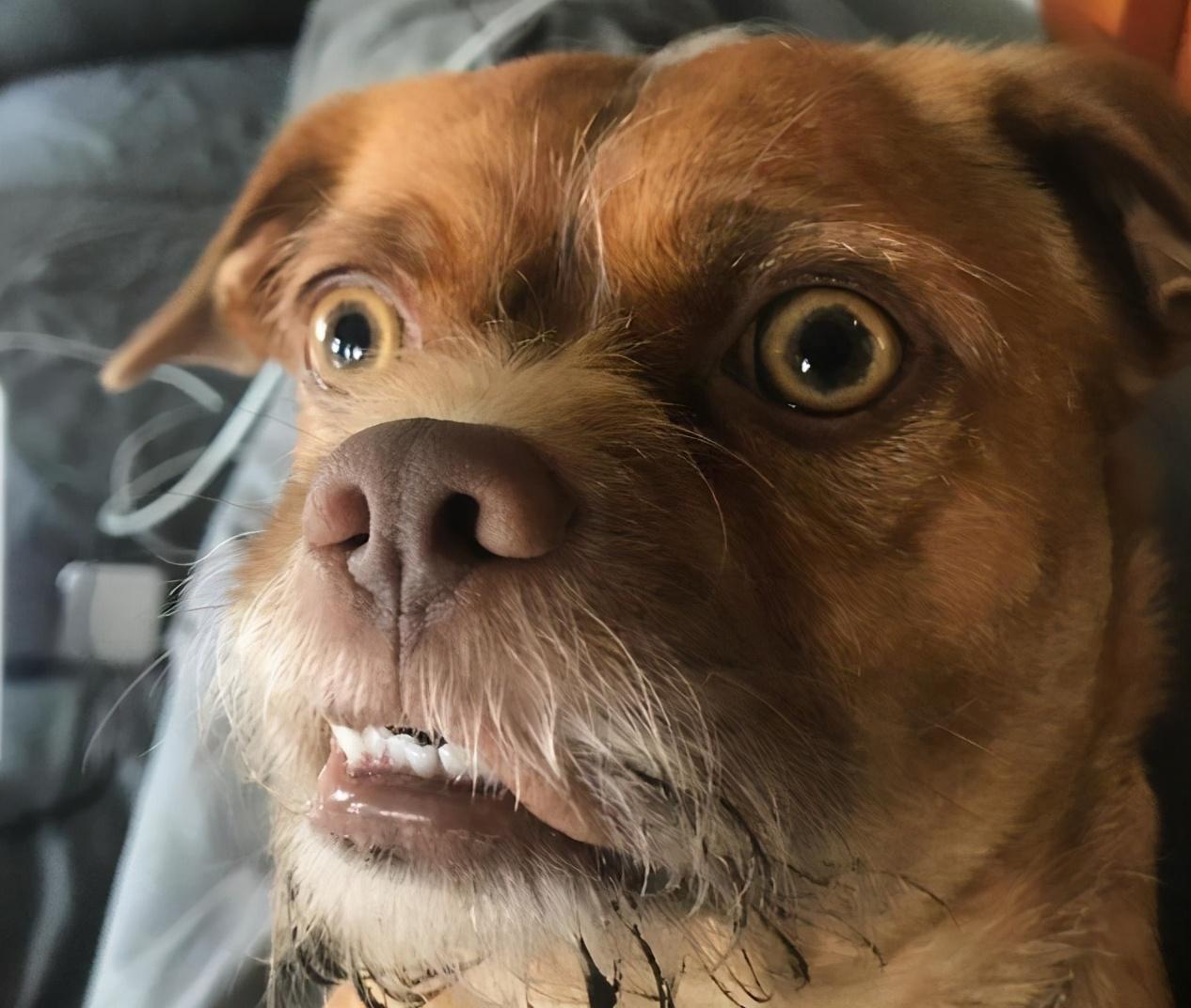 """狗狗""""胡子""""的作用,别再拔它胡子了"""