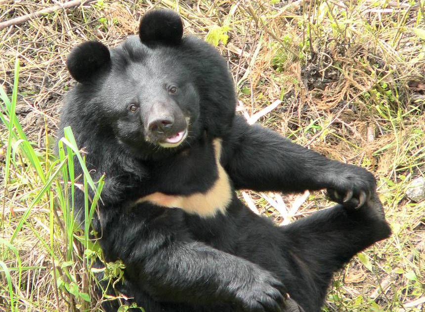 遇到熊如何保命?躺下装死管用吗?这份硬核自救指南请您注意查收