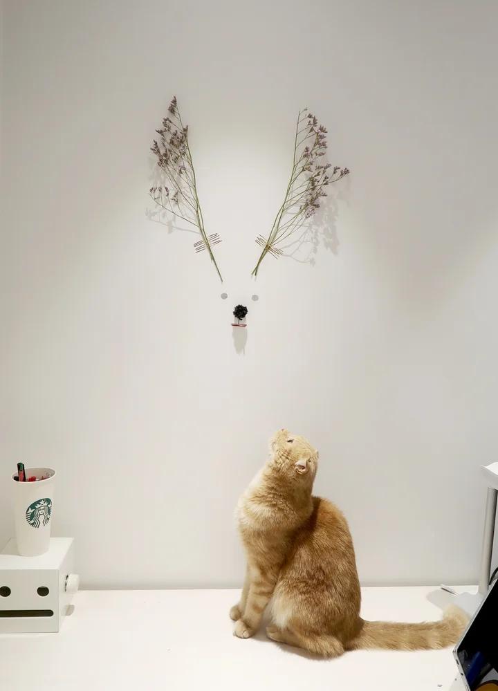 住64㎡小家与猫为伴,独居生活也能很幸福,日子过得简单又踏实