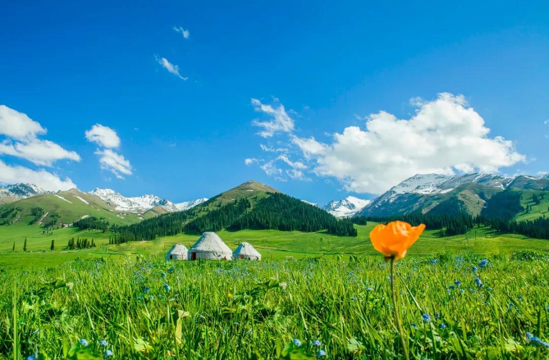 新疆的春天叫伊犁