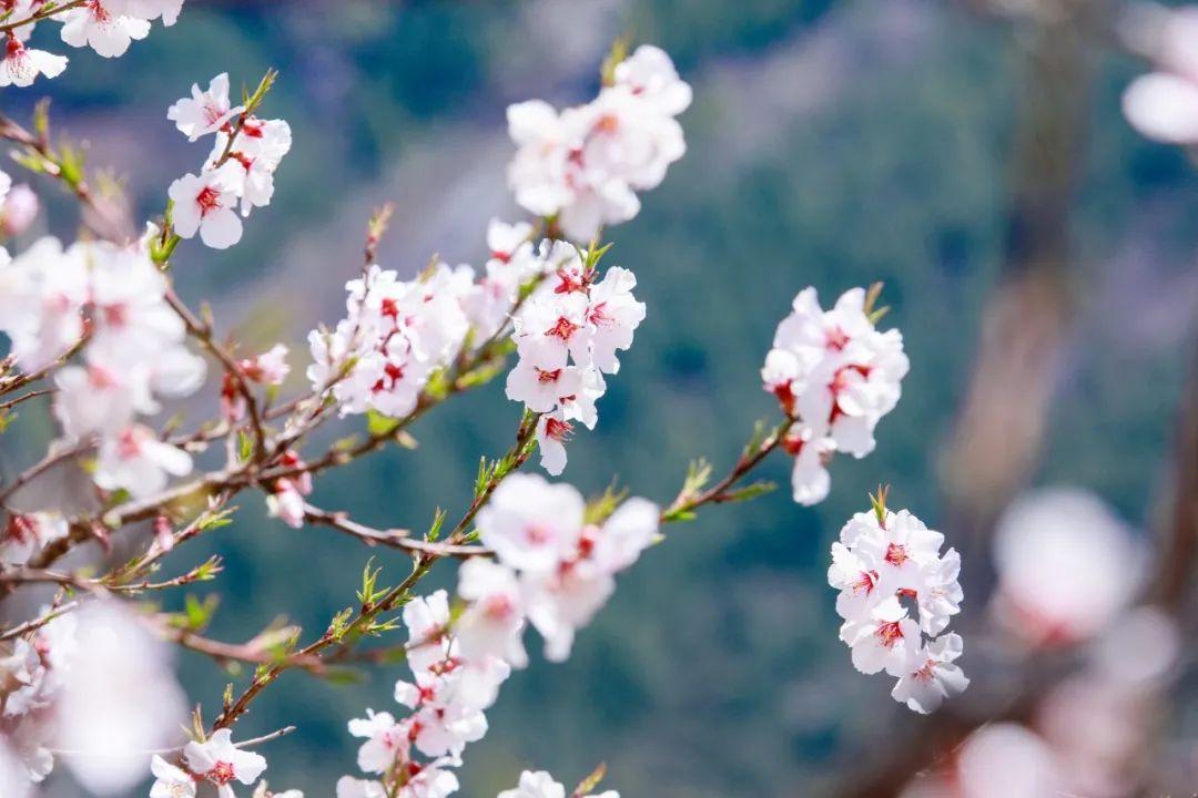 6首最美桃花诗词:桃之夭夭,惊艳了整个春天