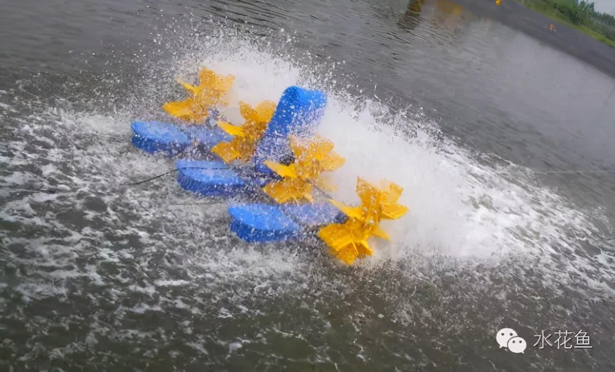 水体老化:鱼塘老水与增氧机水花颜色及其调控方法