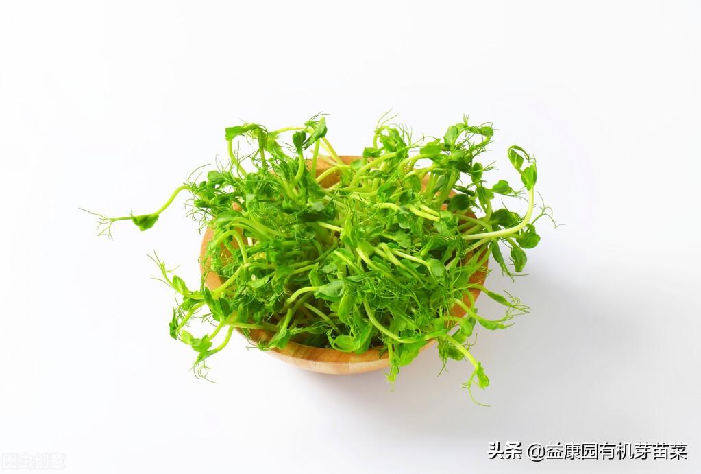 芽苗菜栽培技术管理,教你怎么种芽苗菜