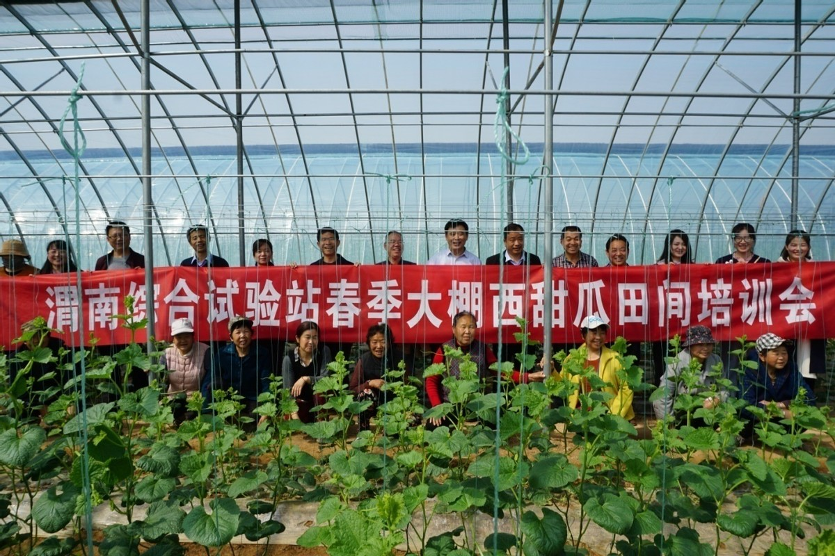 国家西甜瓜产业技术体系专家来渭南交流考察(图)