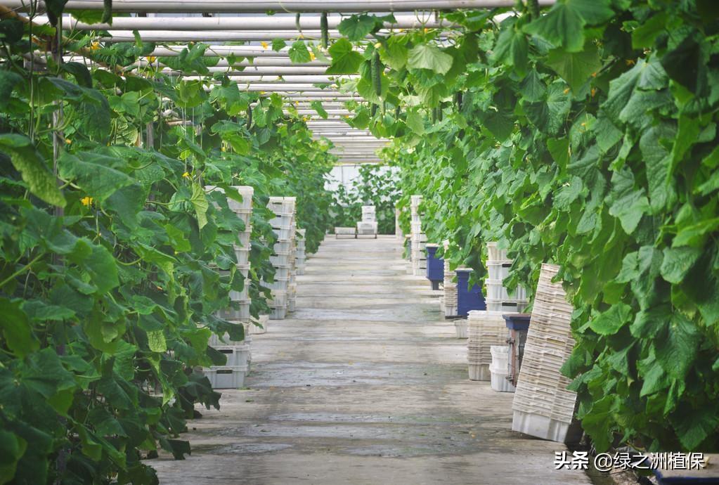 蔬菜全年種植安排計劃表:1-12月種什麼菜,全都說清楚了