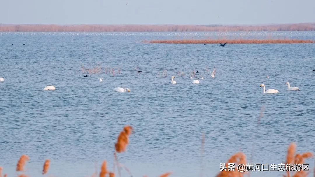 【黄河口生态旅游区】观鸟秘境 迷人仙境