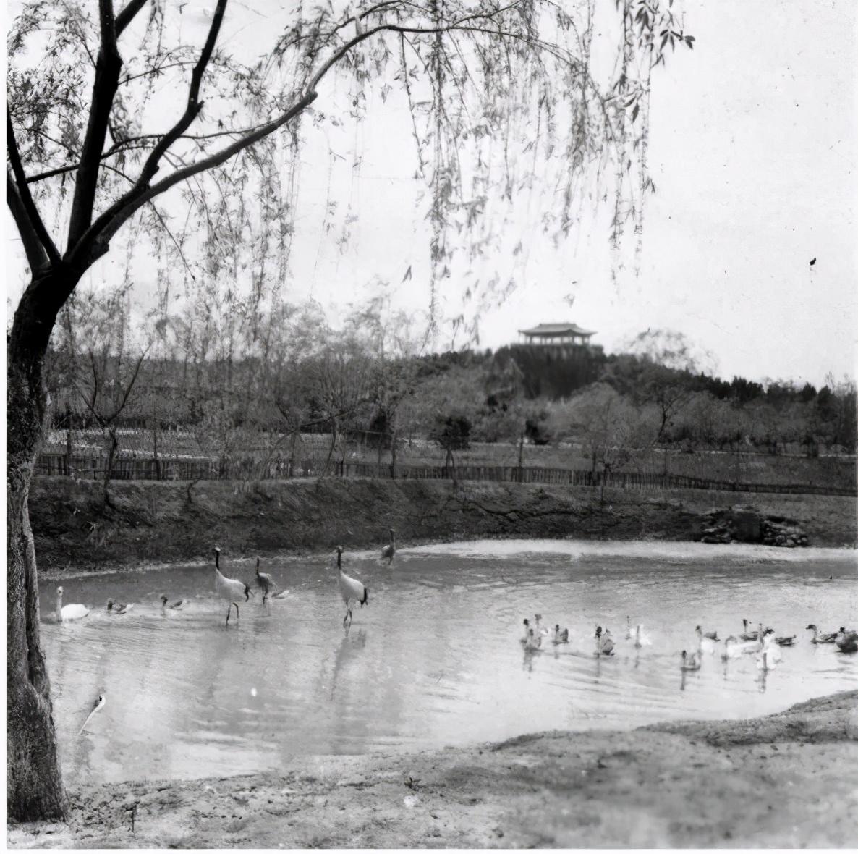 金牛公园:济南人心中的童年记忆