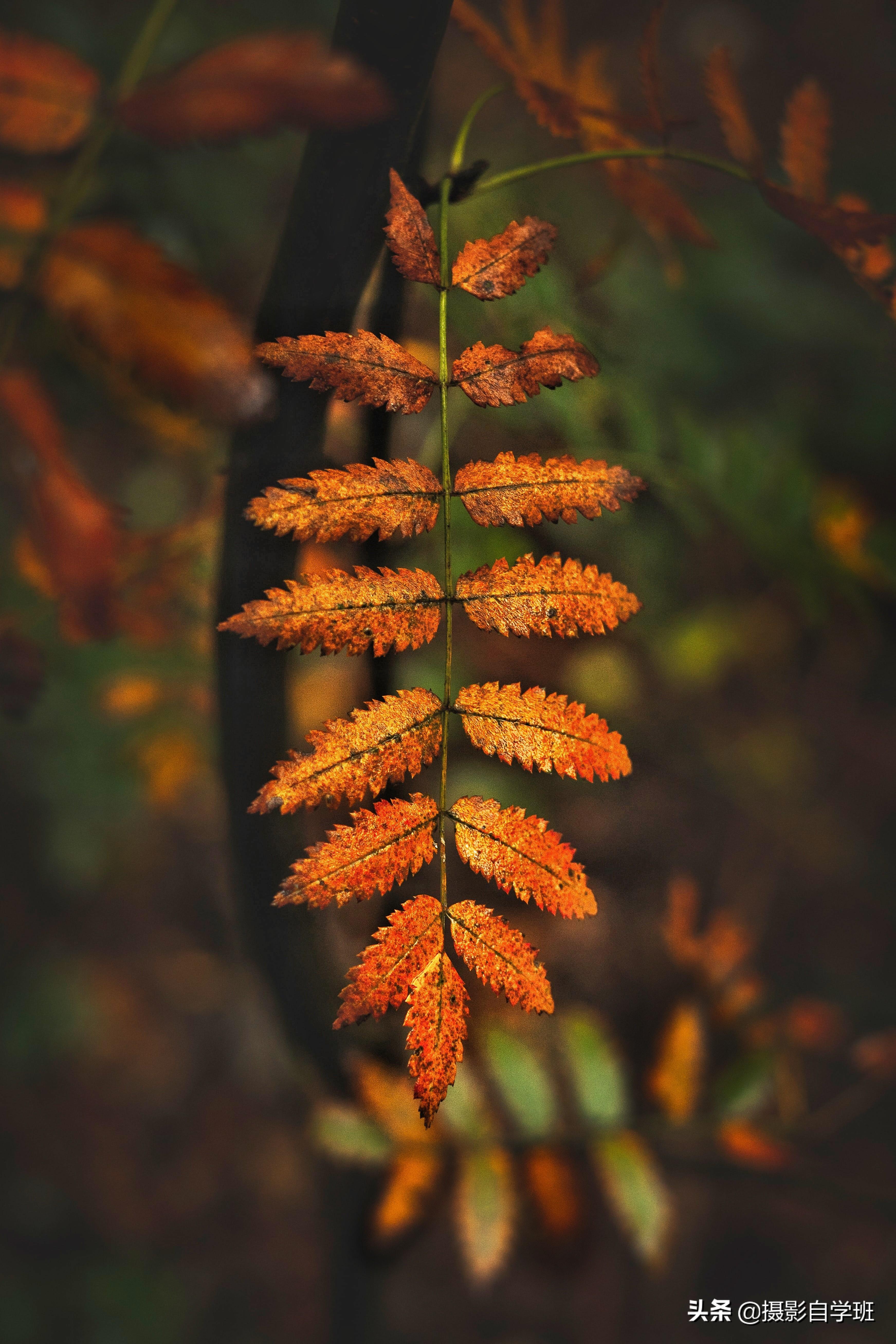 秋天叶子这么拍太美啦!秋叶11大摄影技巧,用27张照片对比讲