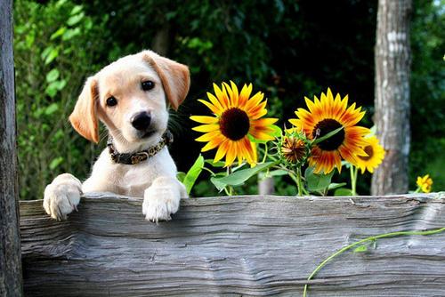为什么农村土狗生病能自愈,而宠物狗却要花钱呢?