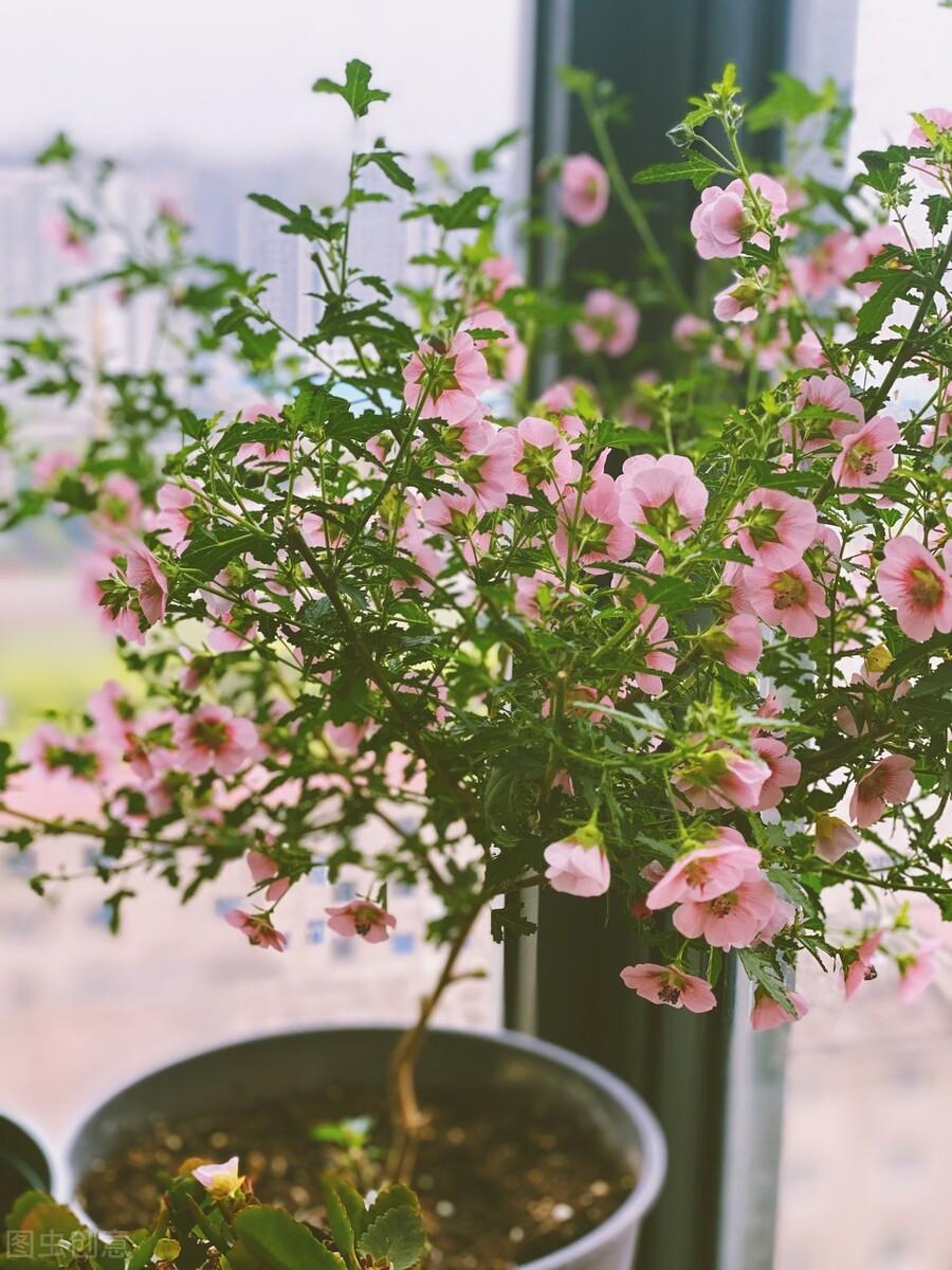 两季相交忙插花!扦插花草的最佳时间到来,20个品种扦插起来 扦插花草 第13张