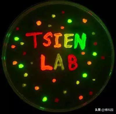 """太棒啦,科学家设计出独特的""""发光""""蛋白质!"""