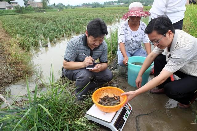 养殖泥鳅投资多少钱(养泥鳅一亩多少成本)