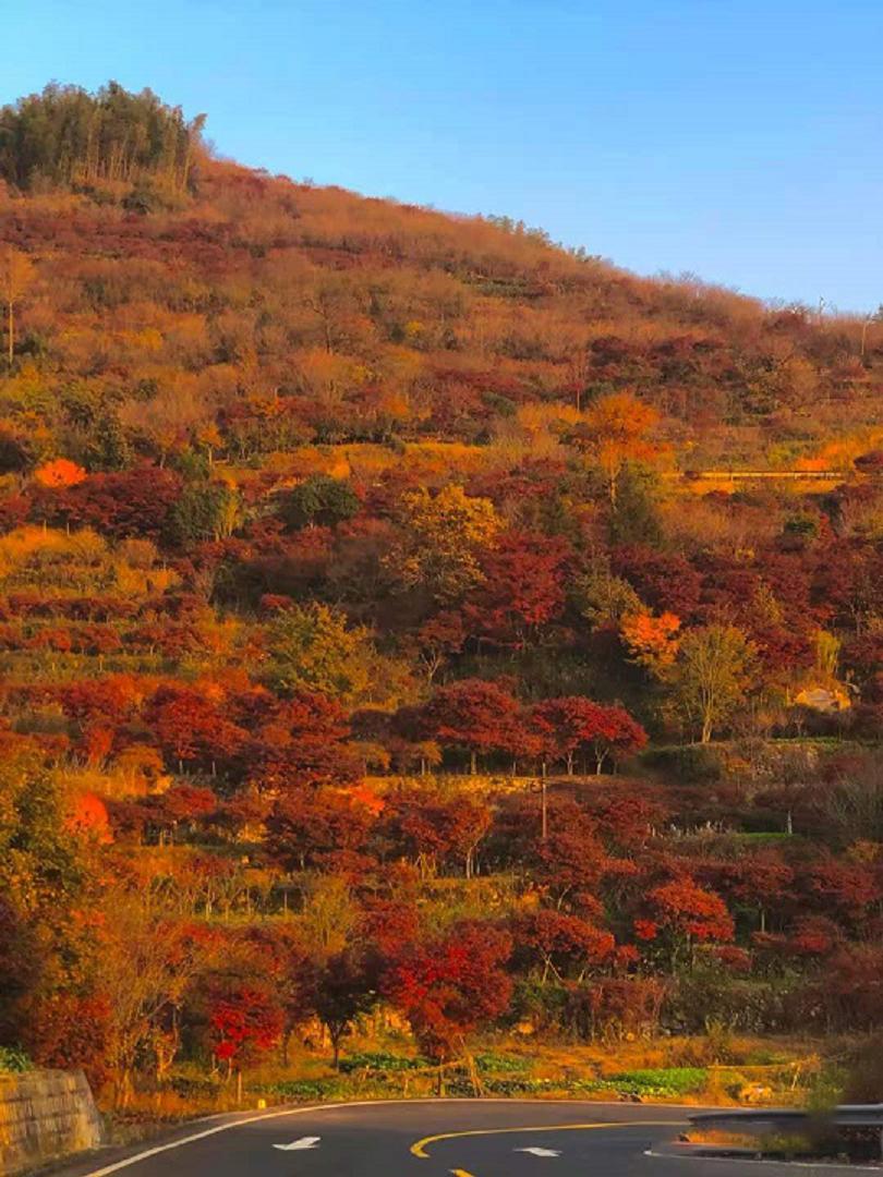 宁波秋天必打卡点,登上太白之麓,遇见古韵与秋韵并存的千年古刹