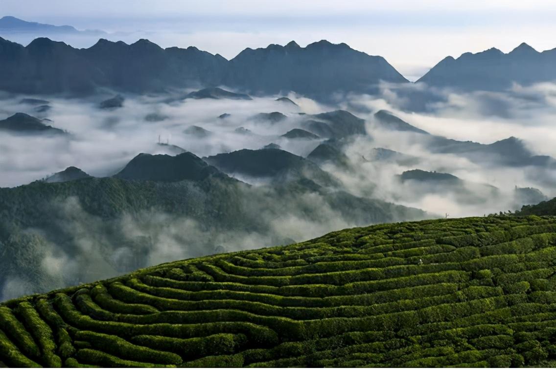 好消息!陕西又获批四个国家级特色农产品优势区
