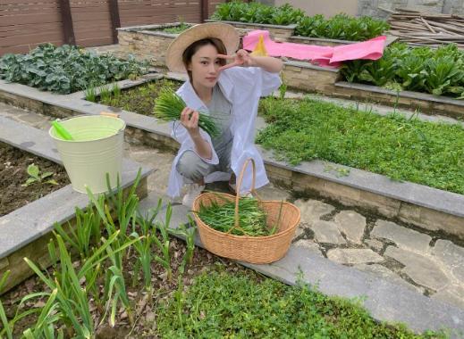 """张馨予:一边乘风破浪,一边归隐田园变身""""菜农""""种7类时令蔬菜"""