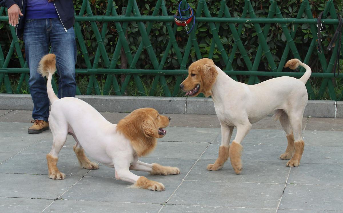 养狗需要注意什么