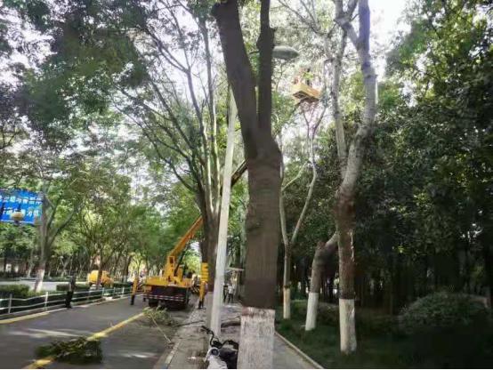 """台风""""烟花""""来袭,漯河昼夜排查抢险保道路安全通畅"""
