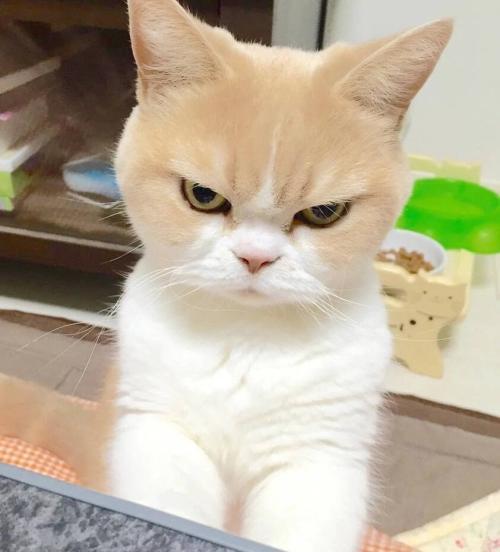 养猫必备品逗猫棒:小小的玩具,有多少主人不知道的原理和细节