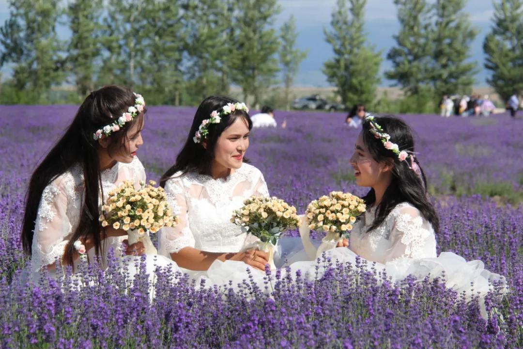 紫色花海 芬芳伊犁――伊犁河谷万亩薰衣草花田掠影