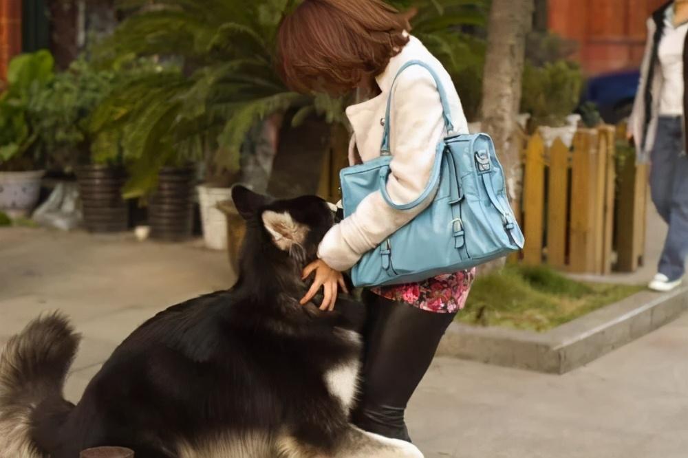 狗狗为什么喜欢抱你大腿?并不一定是要耍流氓