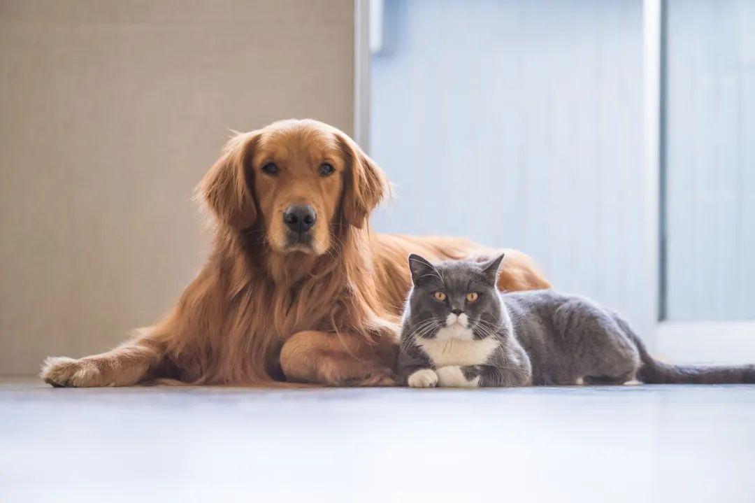 现代人养宠物为什么那么贵?