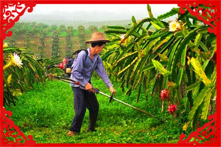 农村家庭5口人,10亩土地,种什么能一年收入10万元以上?
