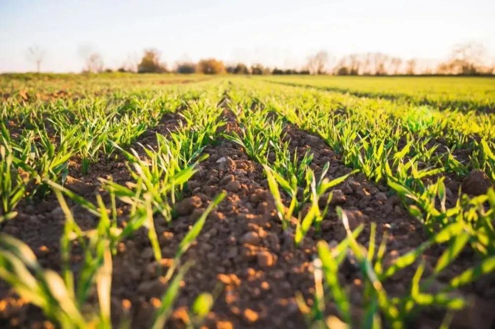 未来20年还有哪些农业新模式?