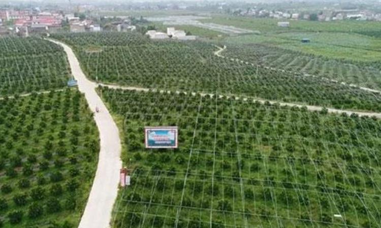 成都金堂县都市现代农业87个项目总投资109.05亿集中签约