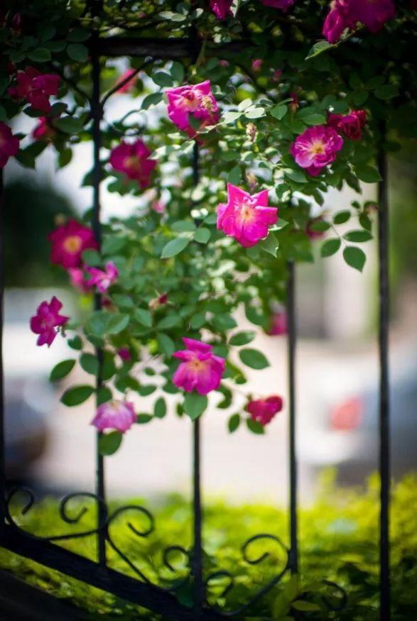 人间最美是相思 几首情词 几首情诗-第4张图片-诗句网