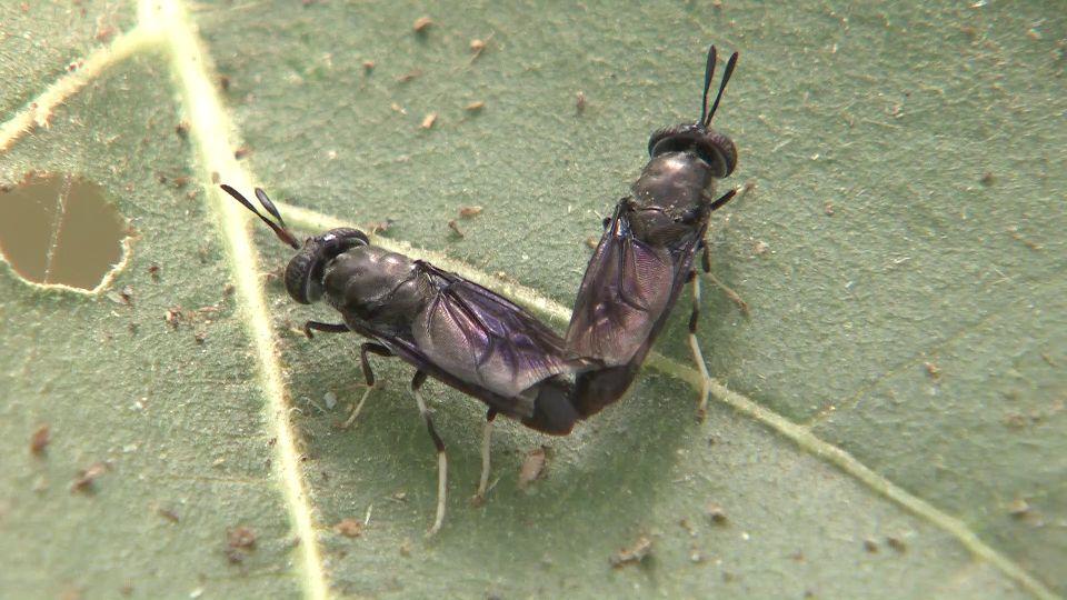 什么样的小昆虫,让世界各国大专院校趋之若鹜