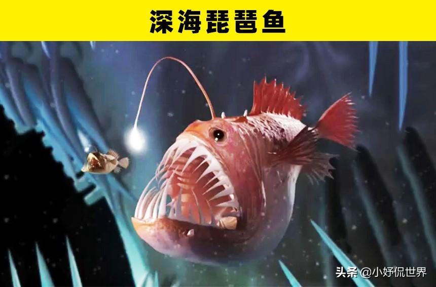 深海100000米以下生物