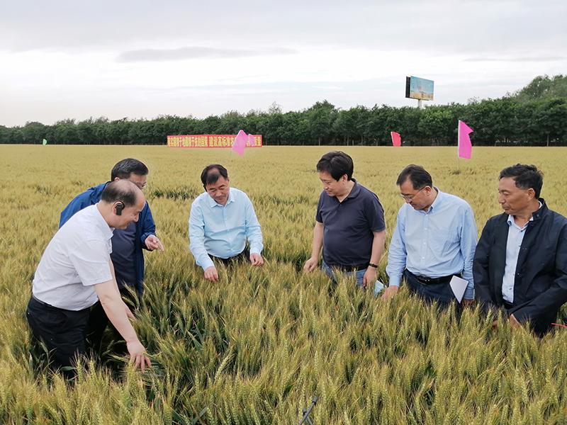 加强高标准农田与耕地质量建设 端牢中国饭碗