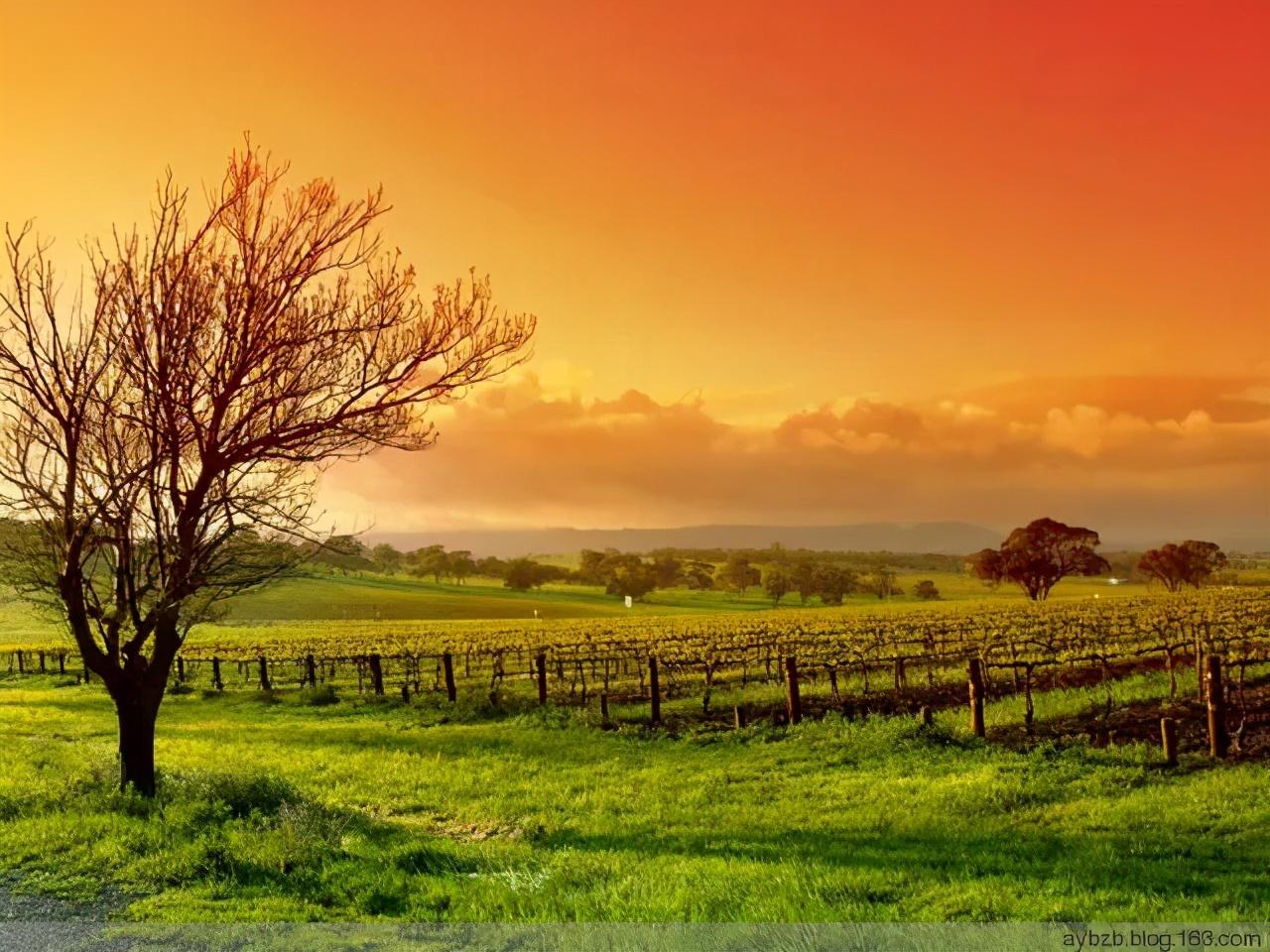 生死有命,富贵在天:活着就是福气,别把自己逼得太紧