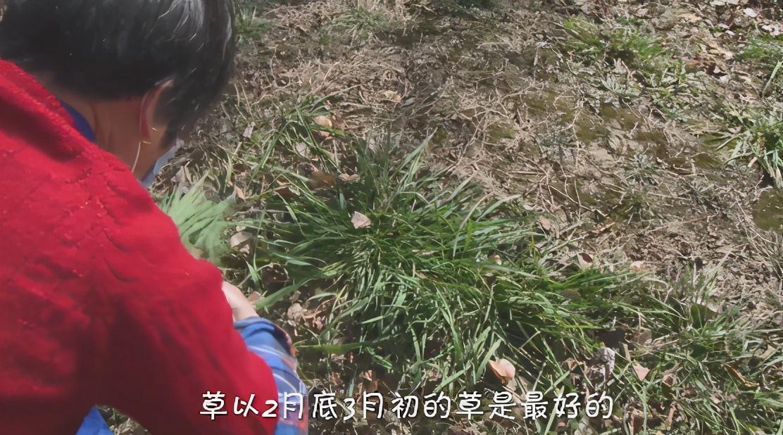 小吃大艺 | QQ弹!这样的绿团子谁能不喜欢呢?