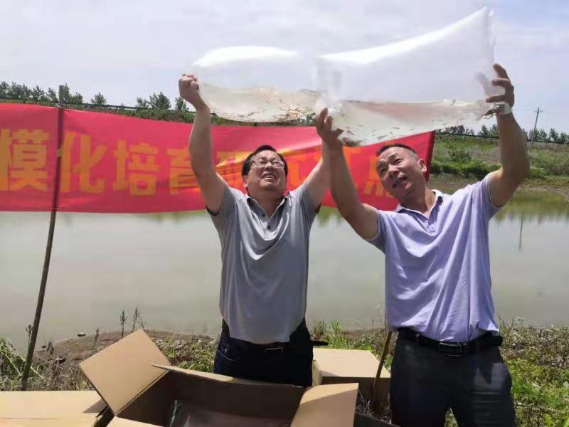 """湖北阳新大力推广""""稻-虾-憨""""模式 力争亩产千斤,兼收鱼虾"""