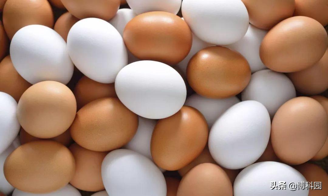 鸡蛋是一样的吗?大数据工具的发明,将揭示卵的大小和功能